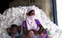 Cotton Packer and Son in Telangana, India (IMAGE)