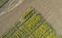 Rapeseed -- Climate Window (IMAGE)
