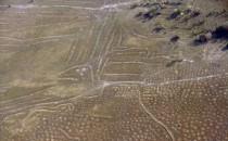 Raised Fields in the Bolivian Llanos de Moxos Region (IMAGE)