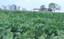US-Grown Soybeans, Brand Undetermined (IMAGE)