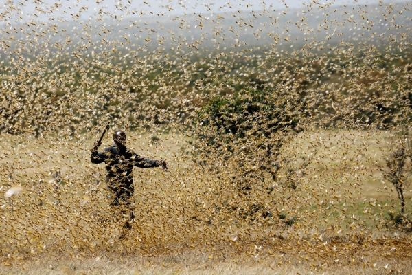 Plague of Locusts May Be Descending Upon Middle East in ...