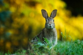 Rabbits are suffering from a new virus outbreak