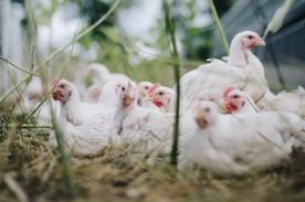 Bird Flu May Be Capable of Erasing the Human Race, Will Be Worse Than Coronavirus?