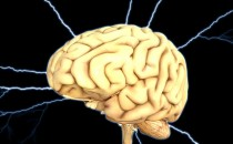 Construction worker finds a Brain on a Wisconsin Beach