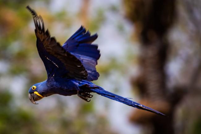 Fires Ravage the Pantanal