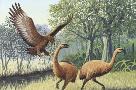 Ancient Madagascan Beasts Brought to Extinction by Human Activity and Megadrought a Millennia Ago