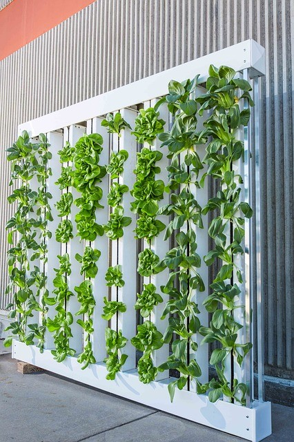Cure or Curse? Colbeck Capital Management on How Vertical Farming Might Change the World