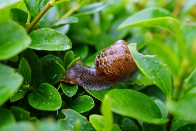 Why Do Snails and Slugs Come Out After It Rains?