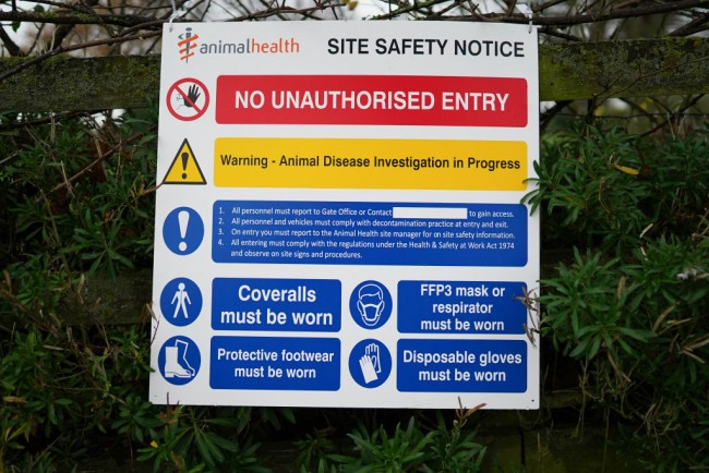 H5N8 Bird Flu Strain Poses Possibility of Another Pandemic, But Researchers Say There Is Still Opportunity to Prevent Them
