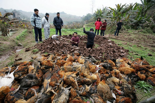 Discovery of the First Case of Bird Flu H10N3 Strain, Will It Be the Next Pandemic?