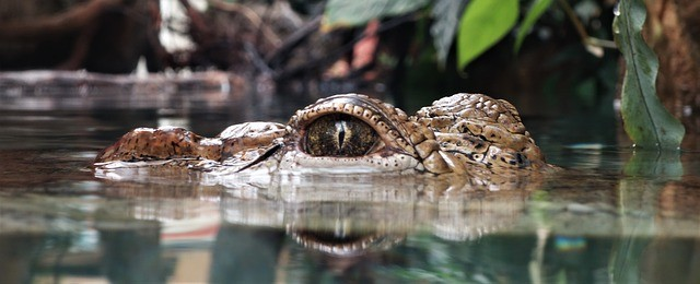 British Woman Seriously Injured After her Twin Fights Off Savage Crocodile in Mexican Lagoon