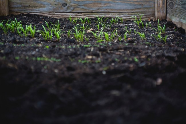 CDC Warns New Deadly Soil Bacteria in The US; Infection's Origin Remains Mystery