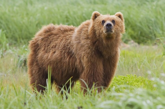 Camp Carnage: Russian Camper Mauled and Snacked on by Large Bear as seen by Terrified Survivors