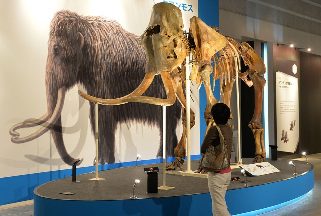 Bioscience Firm Considers Reviving Extinct Woolly Mammoth from DNA Remnants as Test Bed for Emergent 'Jurassic Park'-like Tech