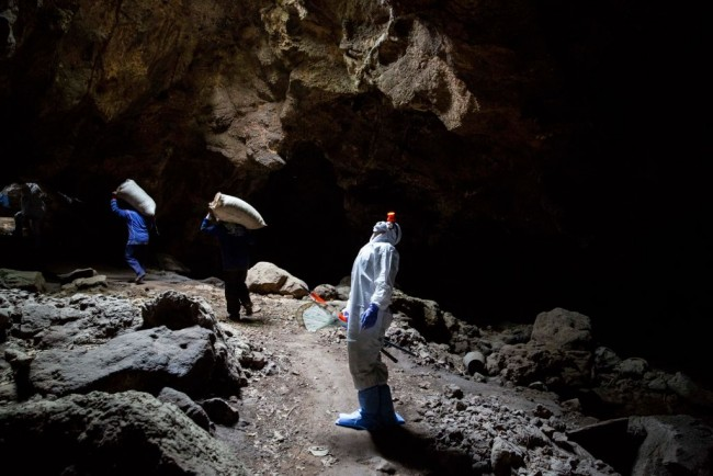WHO To Investigate Bat Caves and Breeding Farms as COVID-19 Sources that has been Looked at Yet